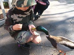 duck-in-hand.jpg