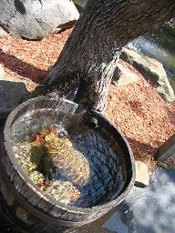 water-tree.jpg
