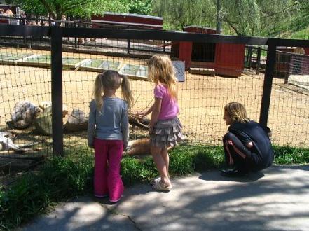 three-looking-at-kangaroos.jpg